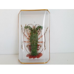 Taxidermy Dried Green Lobster -for Wall hanging Home decor -Vietnam-10.6 inches